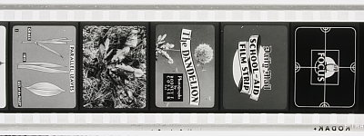 Image of Daily Mail School Aid Film Strip. The Dandelion