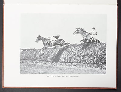 Image of Horses and Ponies